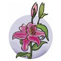 Mikä kukka kuvaa sinua?